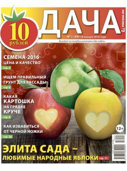 №1 (49) Элита сада — любимые народные яблоки