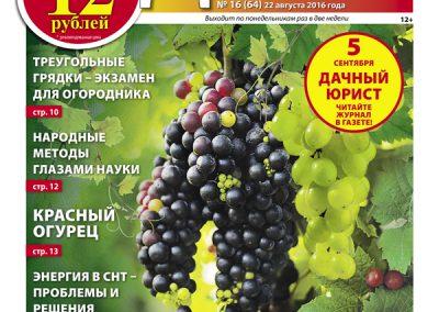 №16 (64) Виноград — в каждый российский сад