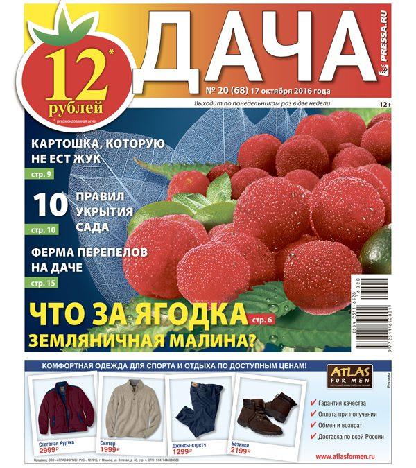 №20 (68) Что за ягодка земляничная малина?