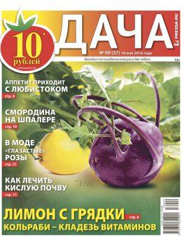 №9 (57) Лимон с грядки. Кольраби — кладезь витаминов