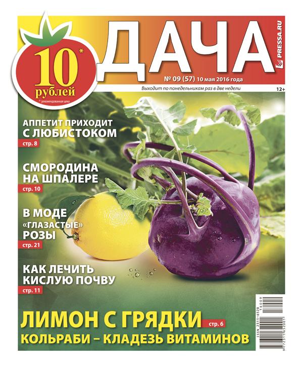 №9 (57) Лимон с грядки. Кольраби - кладезь витаминов