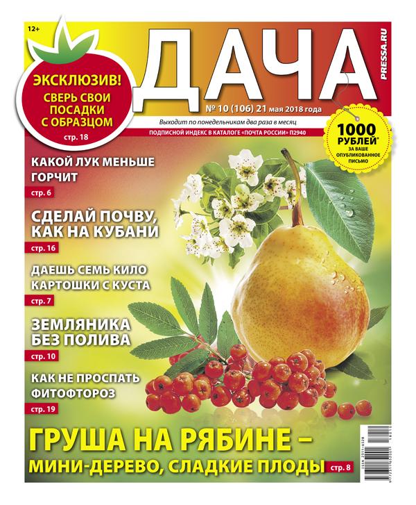 №10 (106) Груша на рябине – мини-дерево, сладкие плоды