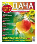 №16 (136) Золотые яблочки