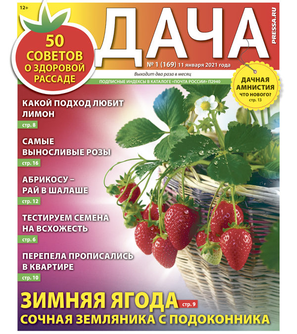 №01 (169) Зимняя ягода