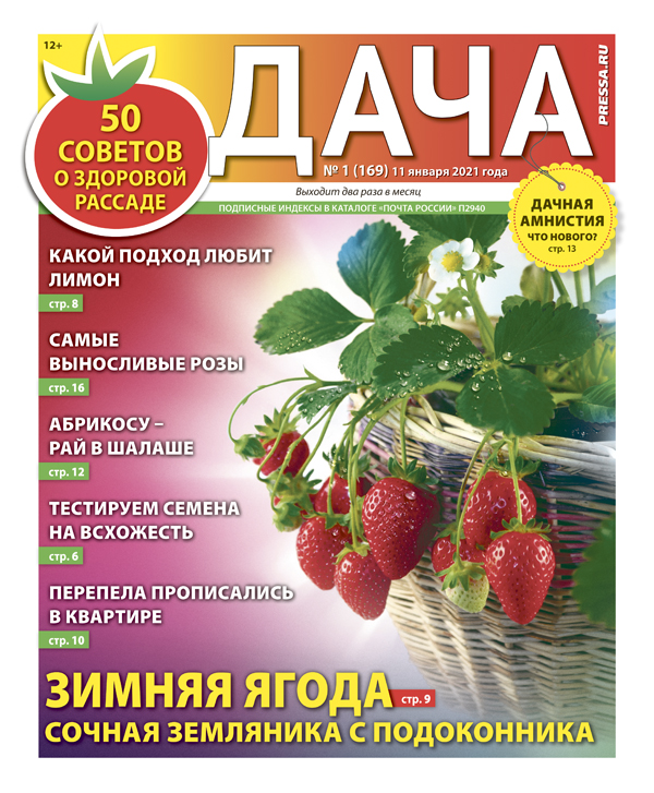 № 01 (169) Зимняя ягода